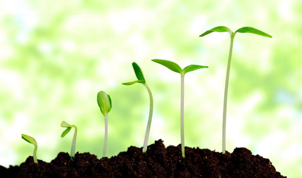 planta-creciendo