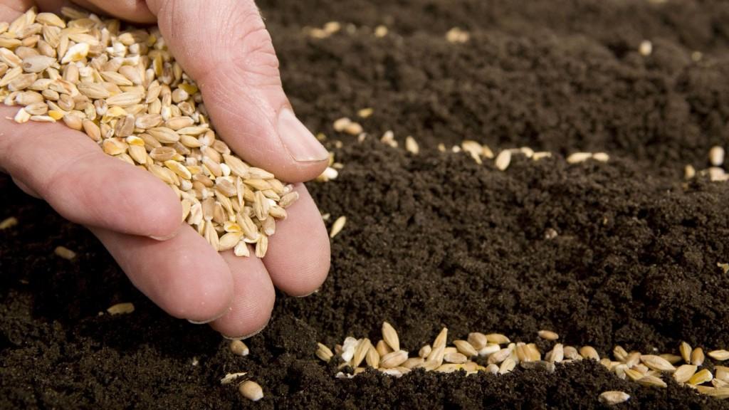 semillas-en-mano