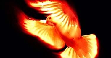 paloma de fuego DESTAQUE