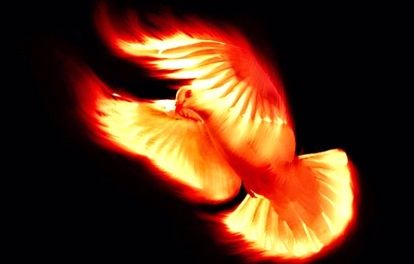 paloma de fuego